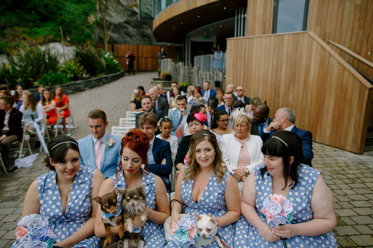 bridesmaids holding the bride and grooms dogs during their ceremony